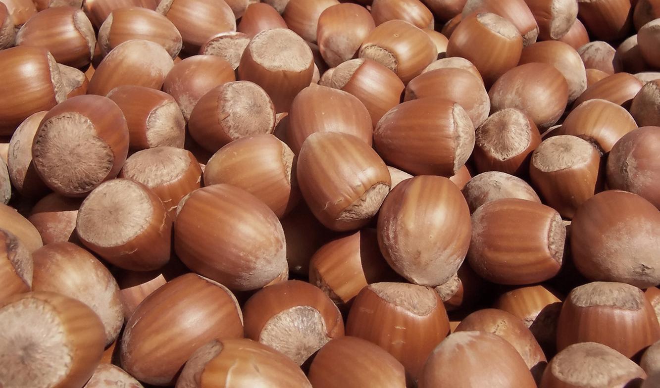 turkish-hazelnuts-report-pangea-brokers