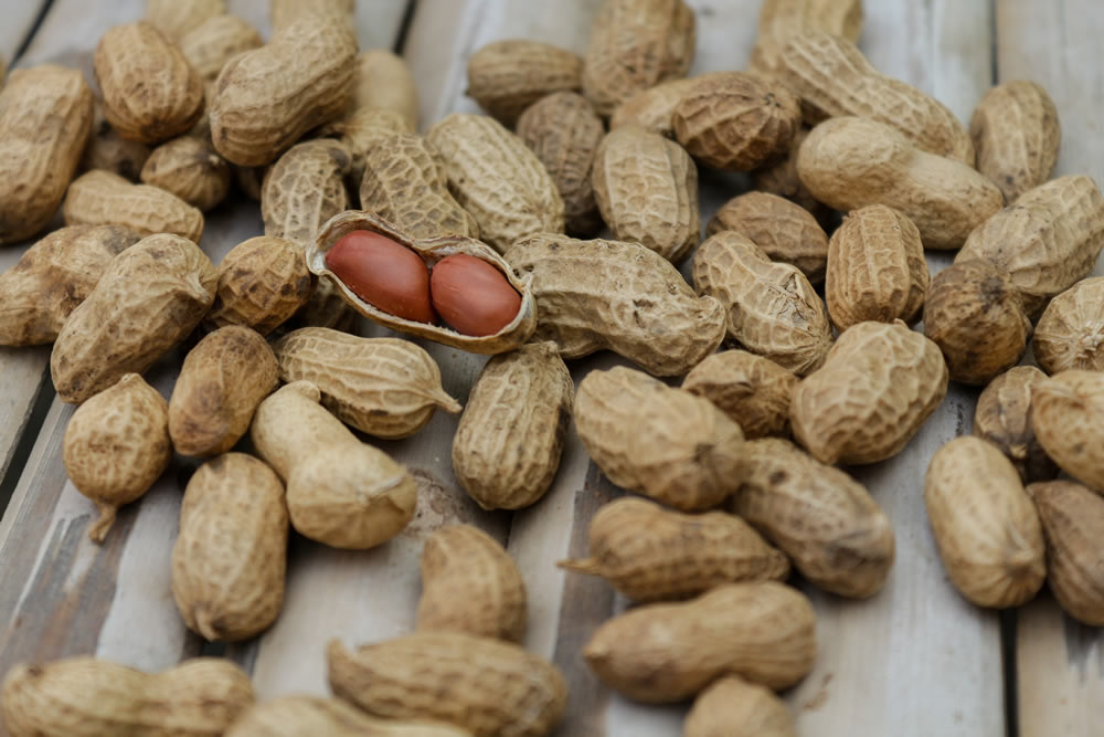 Peanuts Global Market Forecast Report 2019 | Pangea Brokers